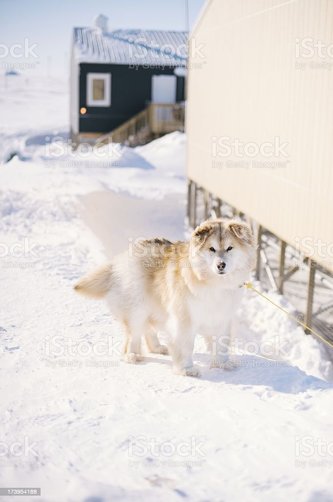 Dog outside royalty-free stock photo