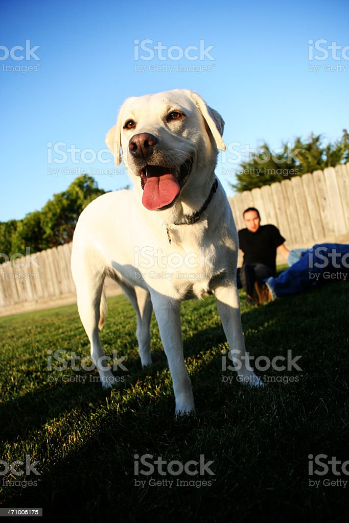 Dog Outside Playing with his Owner royalty-free stock photo