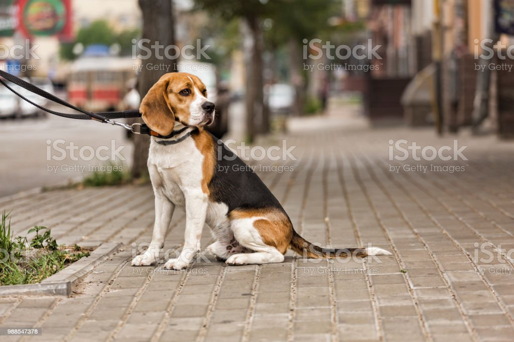 dog is waiting for the owner, a modern city