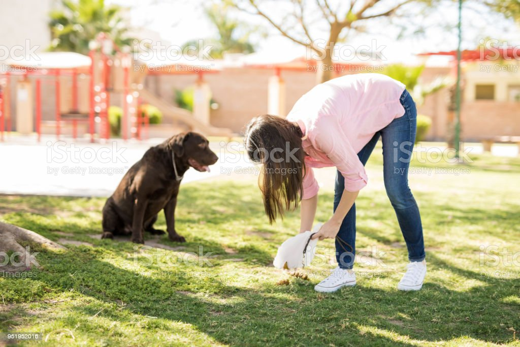 Dog owner picking up after her dog stock photo