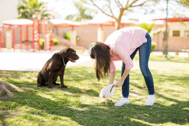 Dog owner picking up after her dog Young woman picking up her dog poop on a back during a walk at a park. poop stock pictures, royalty-free photos & images