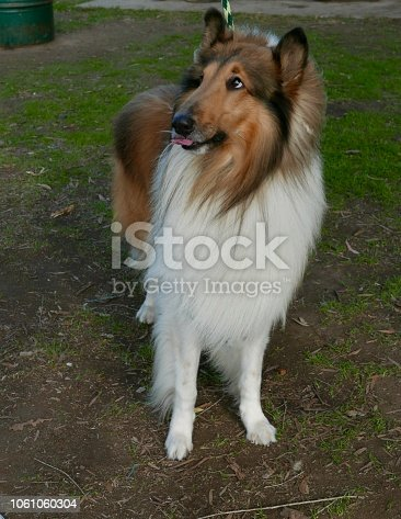 Dogs at the Park and doing agility course