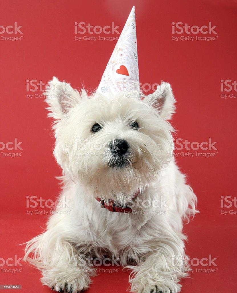 Dog party royalty-free stock photo