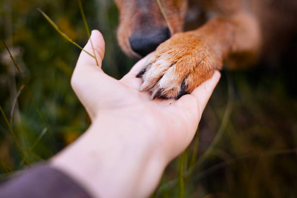 Dog paw and hand Dog paw and hand animal hand stock pictures, royalty-free photos & images