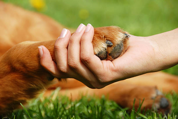 Dog paw and hand shaking  animal hand stock pictures, royalty-free photos & images