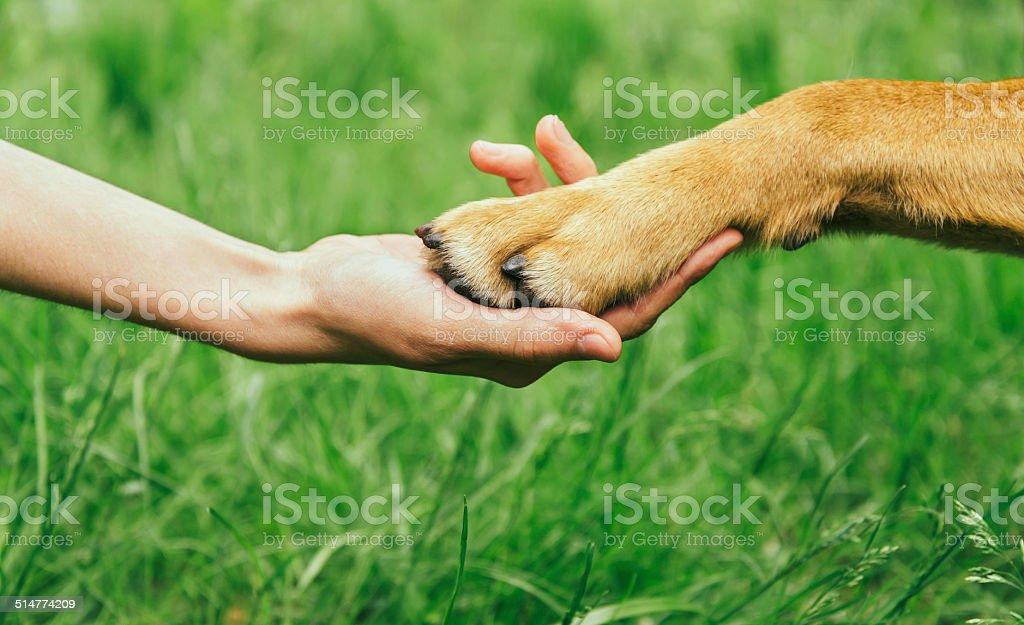 Dog paw and human hand are doing handshake stock photo