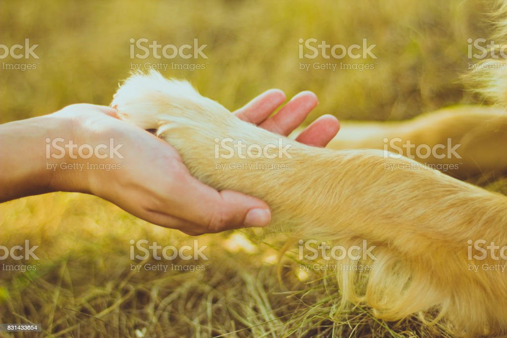 Dog paw and human hand are doing handshake