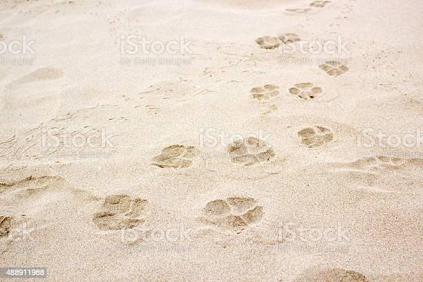 Dog paw footprint on sand picture id488911988?b=1&k=6&m=488911988&s=612x612&h=e uyjovotqhgbcx6xp64ldrmxxke6y53xw908njfdwg=