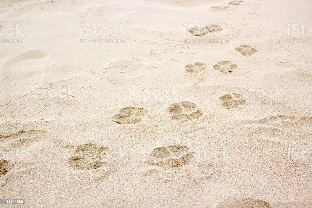 dog paw footprint on sand stock photo