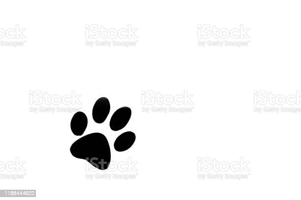 Dog paw isolated on white picture id1188444622?b=1&k=6&m=1188444622&s=612x612&h=xrr1y2erssea0pi0uc5paso uuhkkqkpr0kqx7bgehy=