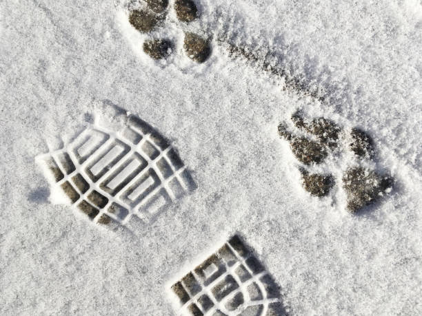 Dog, Paw Print, Happiness In Snow (1a4) stock photo