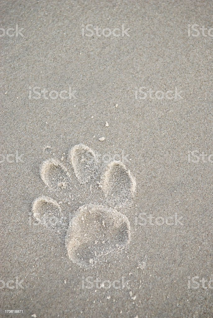 Dog Paw Print in Gray Sand stock photo