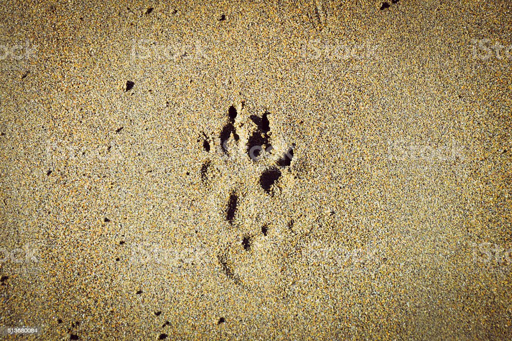 Dog paw print in the sand on beach stock photo