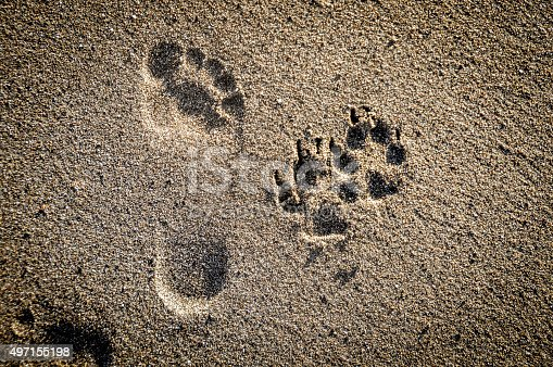 istock Dog paw prints in the sand on beach 497155198