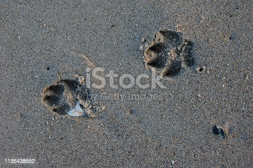 istock Dog paw prints in the wet sand 1135438552