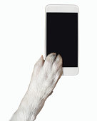 dog paw touching the smartphone screen