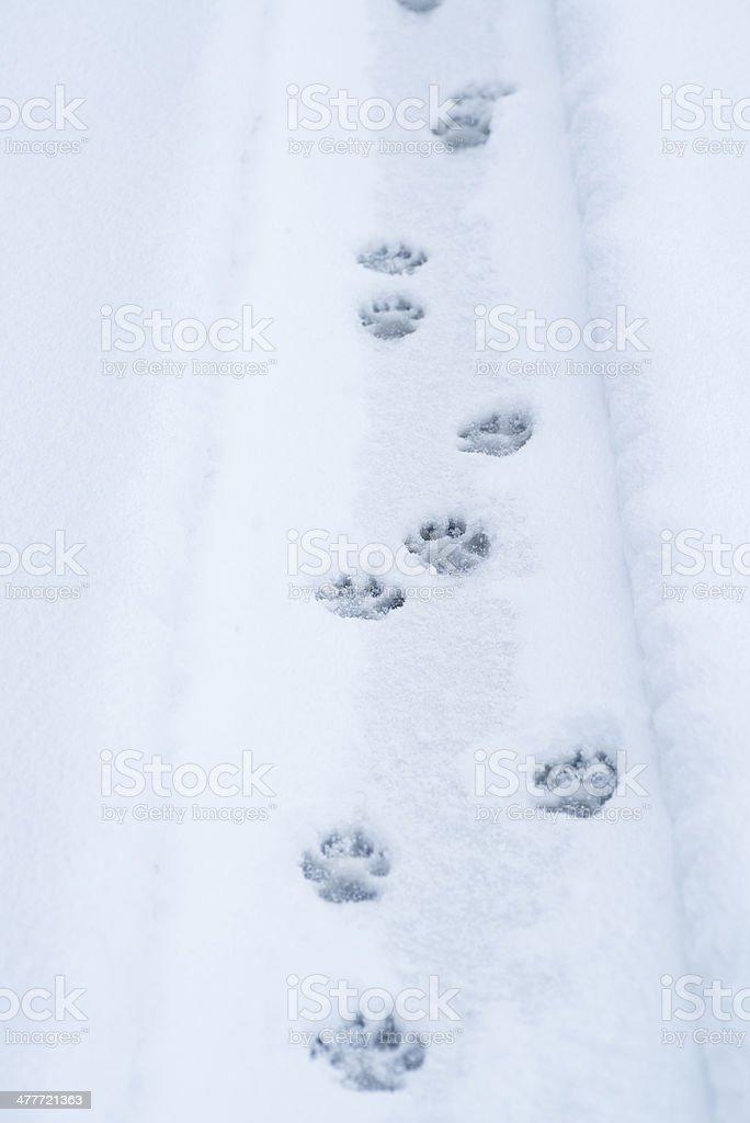 Dog paw tracks stock photo