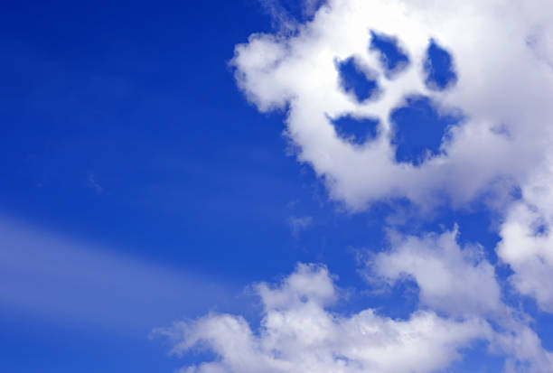 dog paw trail in the sky clouds stock photo