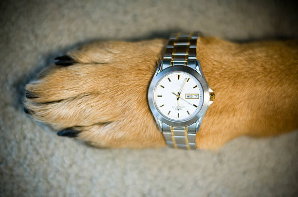 Dog paw with watch of silver and gold.