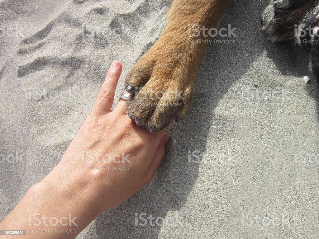 Dog Paw & Woman Hand royaltyfri bildbanksbilder
