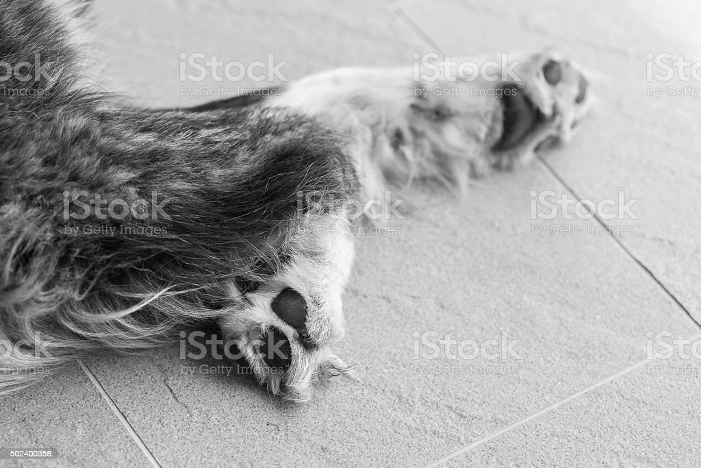 Hund Pfoten Makro Schuss – Foto