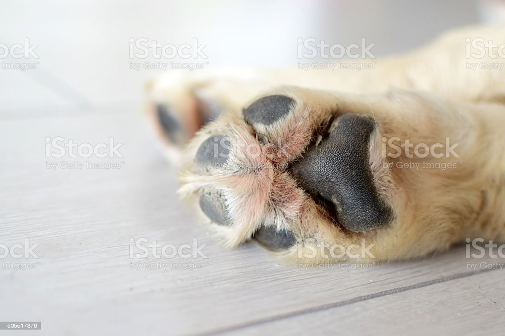 Dog paws stock photo