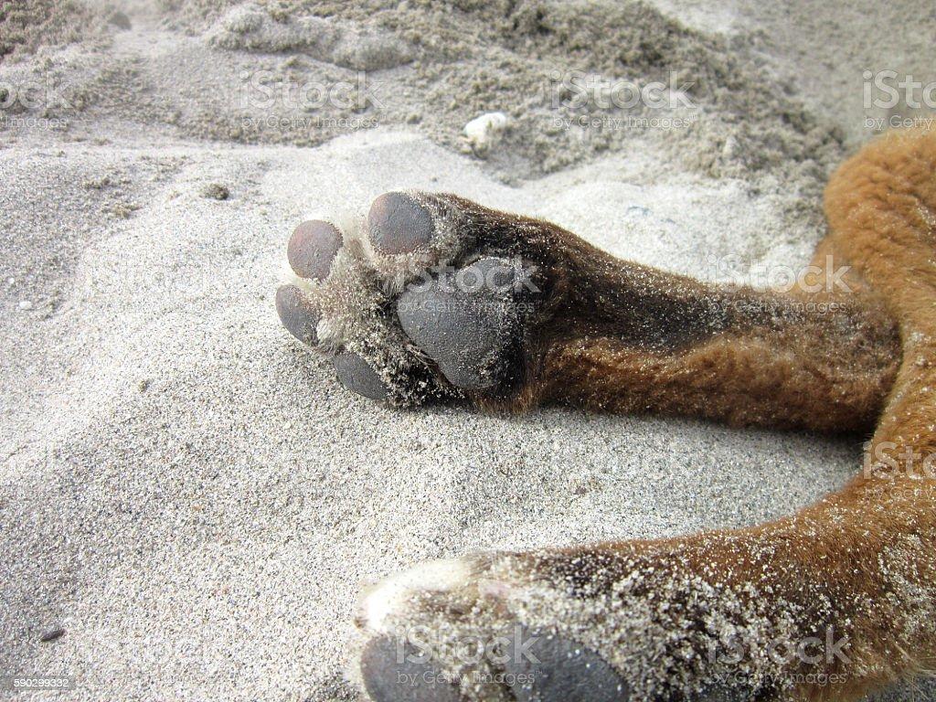 Dog Paws royaltyfri bildbanksbilder
