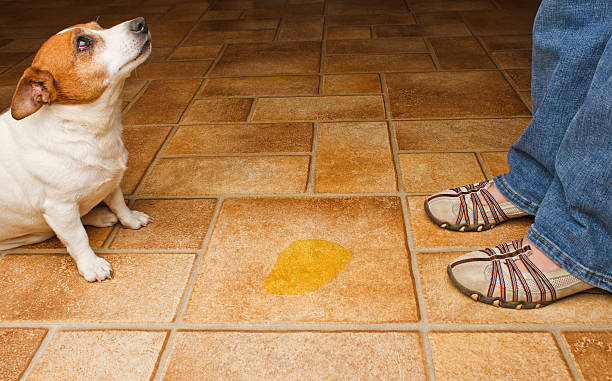 Dog Pee Scold Front stock photo