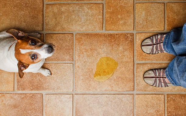 Dog Pee Scold Top stock photo
