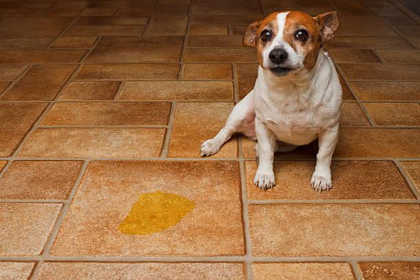 Dog Pee Spot stock photo