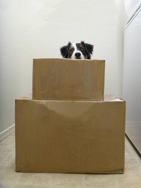 Dog Peeking over Blank Boxes stock photo