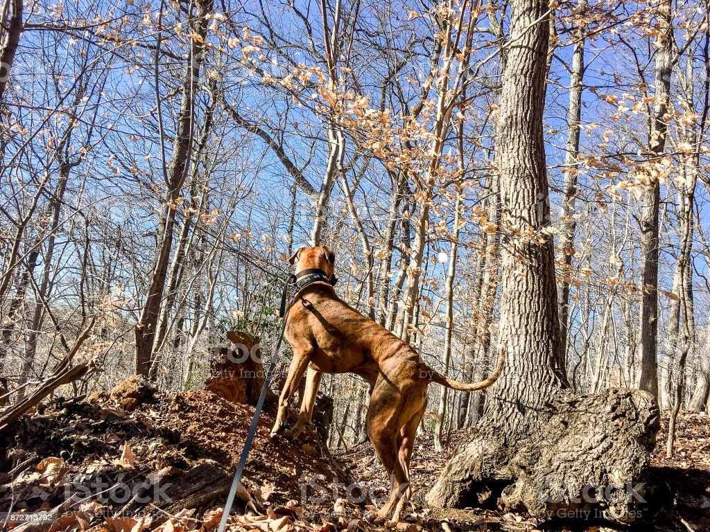 dog perched on a hill in the woods stock photo