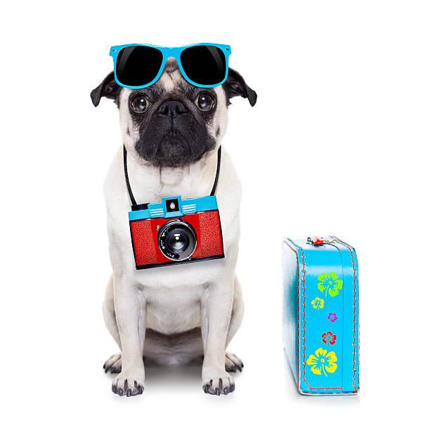 chien photographe - valise humour photos et images de collection