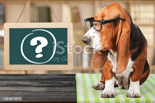 istock Dog. 1034974572