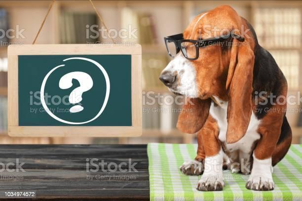 Dog picture id1034974572?b=1&k=6&m=1034974572&s=612x612&h=kff2fzmenyi8  xn qkotymlbsiamqpusgfrydppzrw=