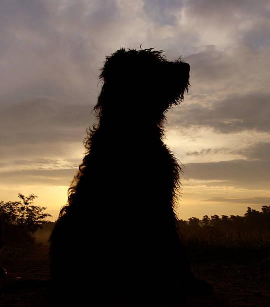 Dog picture id138036165?b=1&k=6&m=138036165&s=612x612&w=0&h=7exjvpe941spvtccq uiej9jv786scdrtwtnttacxtw=