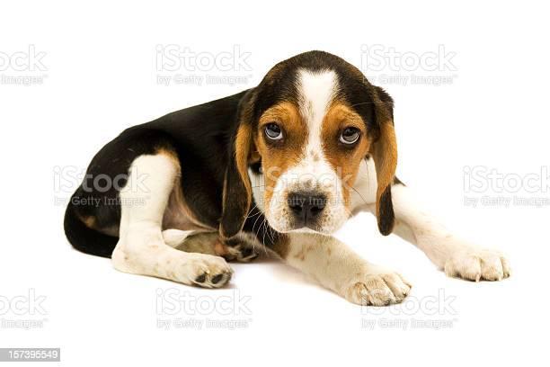 Dog picture id157395549?b=1&k=6&m=157395549&s=612x612&h=bnc3  gx  zqzwvqr fmbr4azhny9gh255zbyreqpiq=