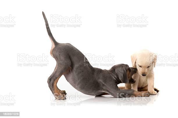 Dog picture id180697026?b=1&k=6&m=180697026&s=612x612&h=mmhpoz3wuji0ewgrqx3ewvlnxawpqupbxwrhqfcgeua=