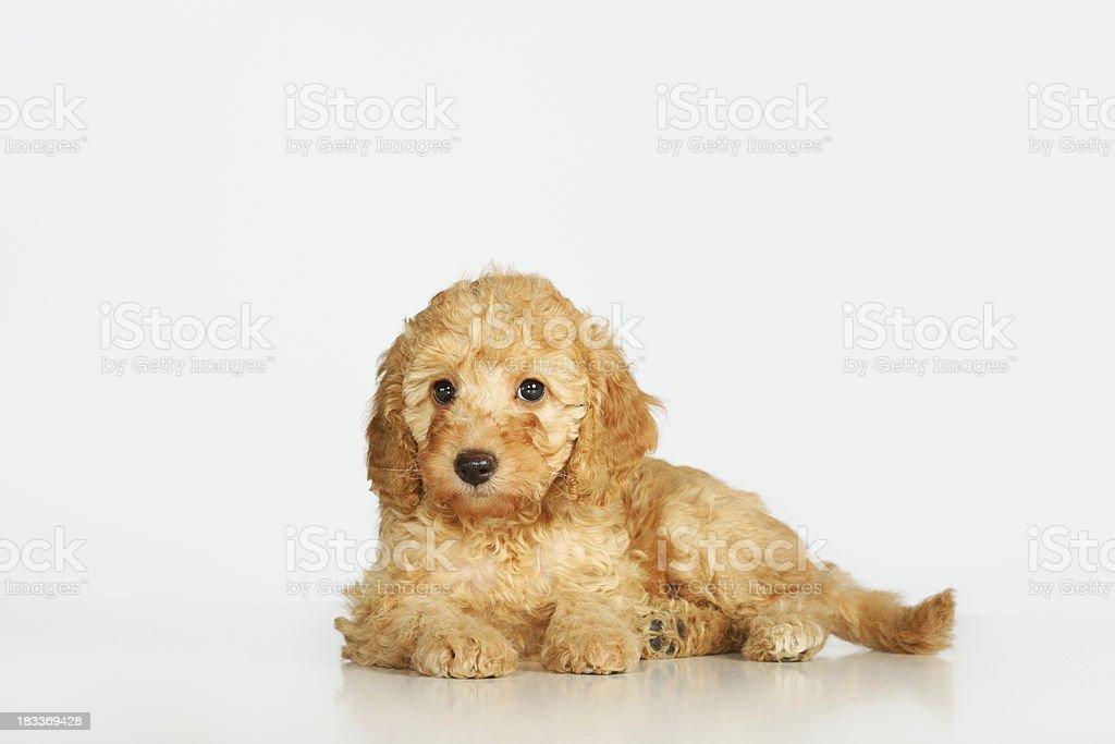 - Hund – Foto