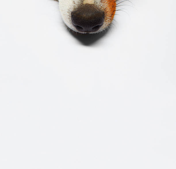 dog - nose stock photos and pictures
