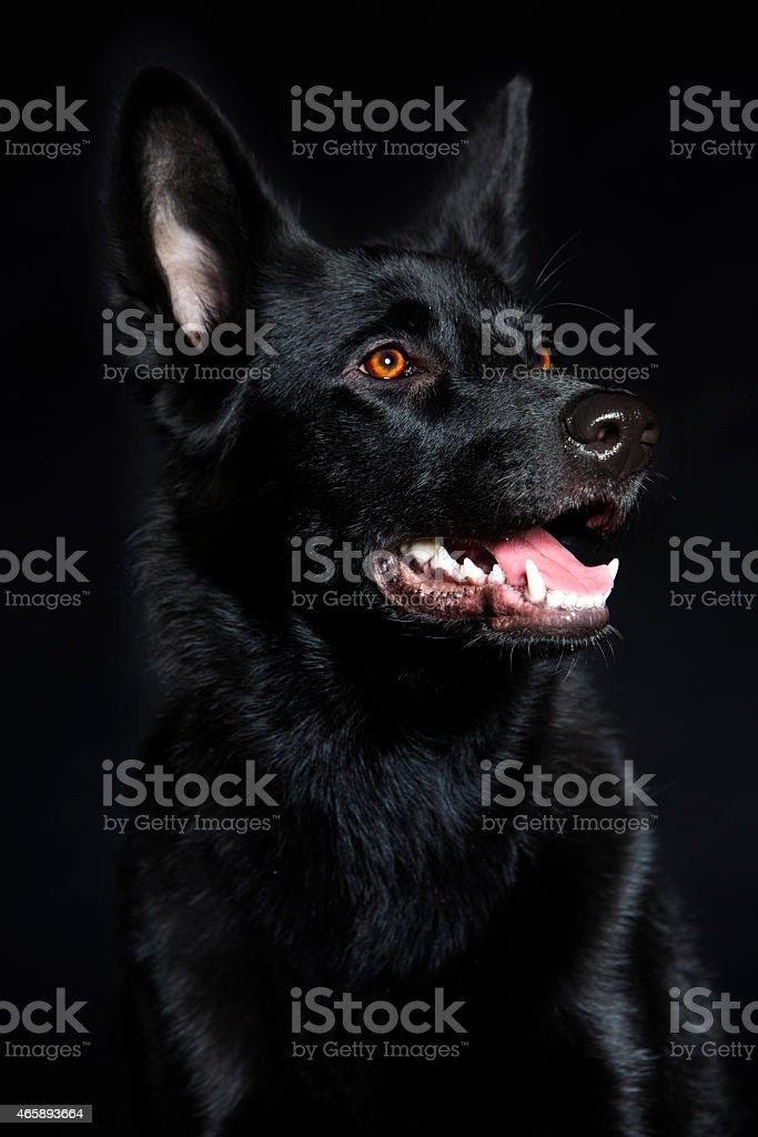 Cachorro - foto de acervo