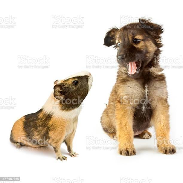 Dog picture id477462159?b=1&k=6&m=477462159&s=612x612&h=gqqngwfcvbb7v4isnpb 6n00pitqjhw6gwecxtwklti=