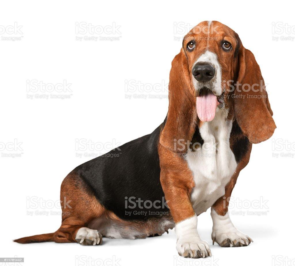 Pies  – zdjęcie