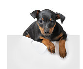 istock Dog 654112024