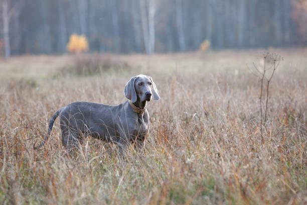 Dog picture id654119258?b=1&k=6&m=654119258&s=612x612&w=0&h=st8zviom4bikxjtaybh mjxvefqn36pexje2brearha=