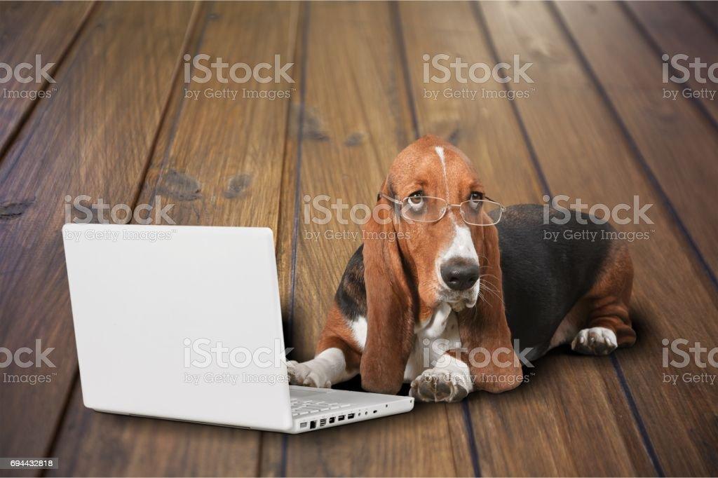 Perros.   - foto de stock