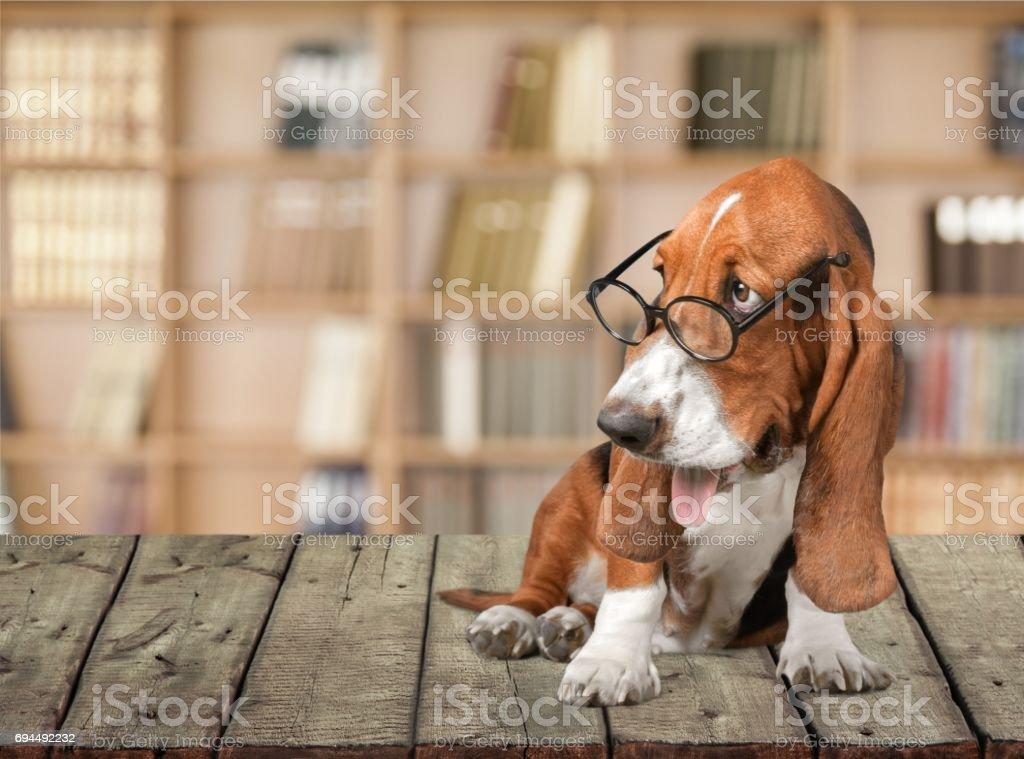 Dog. – zdjęcie