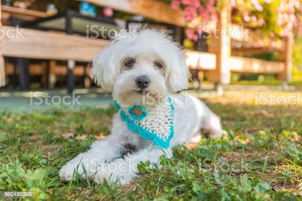 Dog picture id860495360?b=1&k=6&m=860495360&s=612x612&h=p77o0mpcheunw le3ky1xunsbbqwuxh8texyixw xdi=