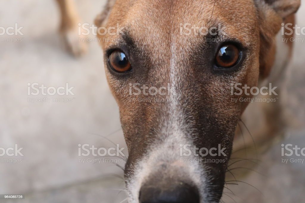 Dog - Royalty-free Animal Stock Photo