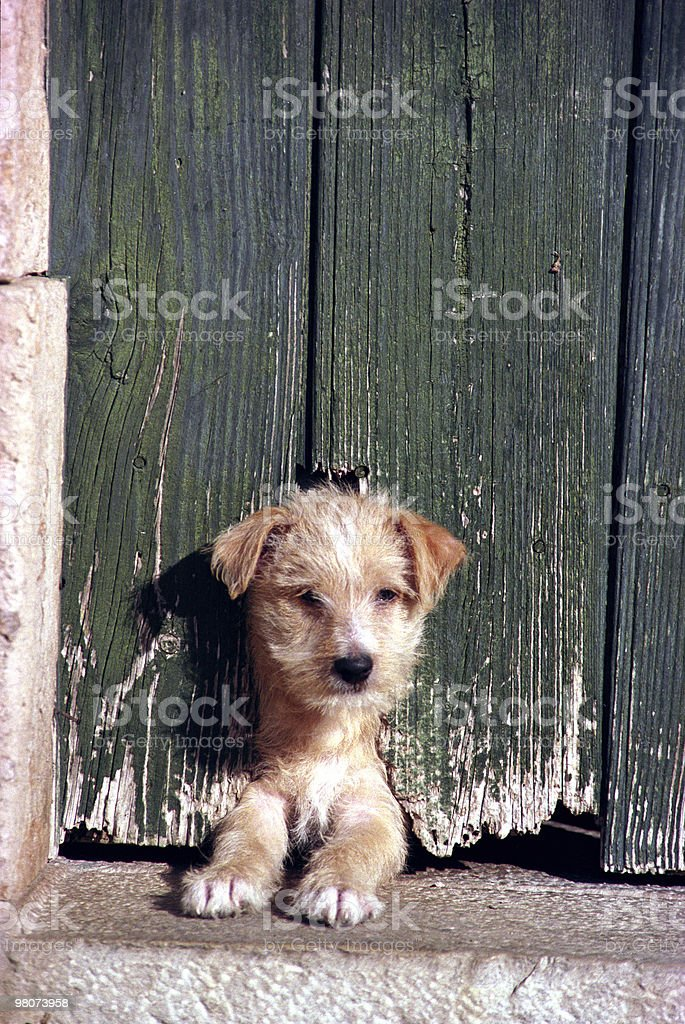 Cane foto stock royalty-free